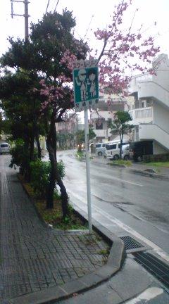 沖縄の子どもはどうして傘をささないのか